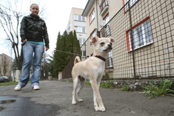 Zodpovedných majiteľov psov čaká odmena.