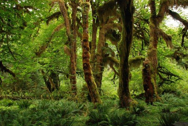 Najviac ohrozené sú dažďové pralesy a ďaľšie, doteraz nedotknuté prírodné oblasti.