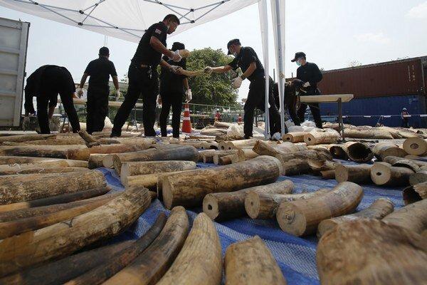 Podľa thajských colníkov zásielka so sloními klami z afrického Konga vážila približne štyri tony.