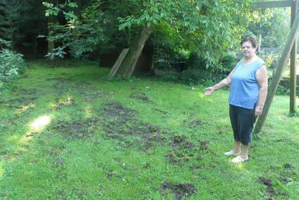 Margita Šimková ukazuje, ako diviaky zničili pozemok blízko jej domu.