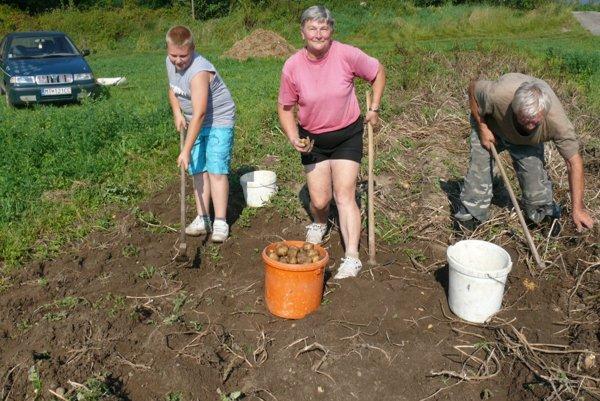 Minulý týždeň už zemiaky vykopávali azbierali aj manželia Ondrej aViera Čierni. Pomáhal im aj vnuk Patrik.