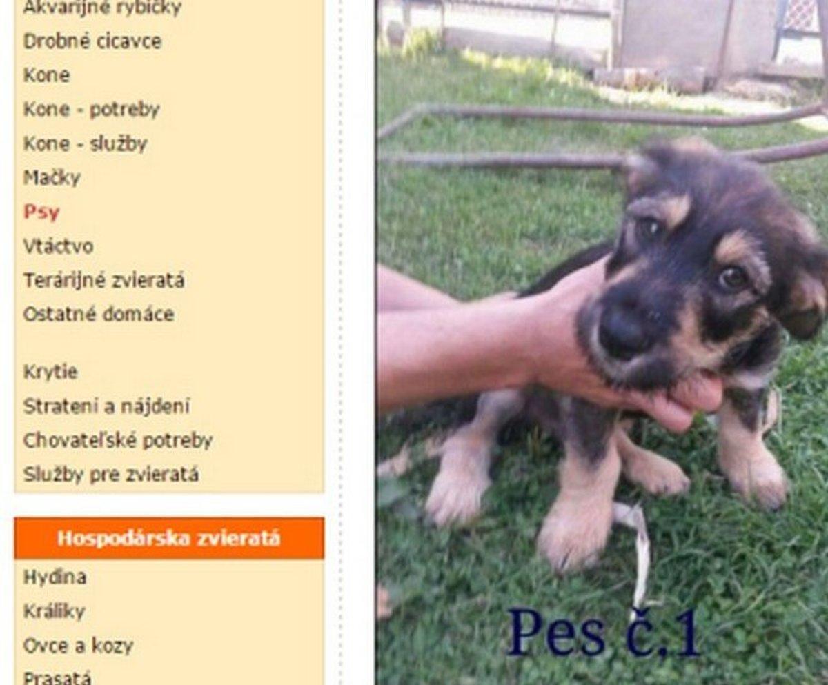Rómom v inzerátoch nechcú ani darovať šteniatka - domov.sme.sk dab5e876745