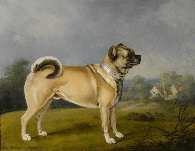 Mops kedysi vyzeral úplne inak. Maľba z roku 1802.