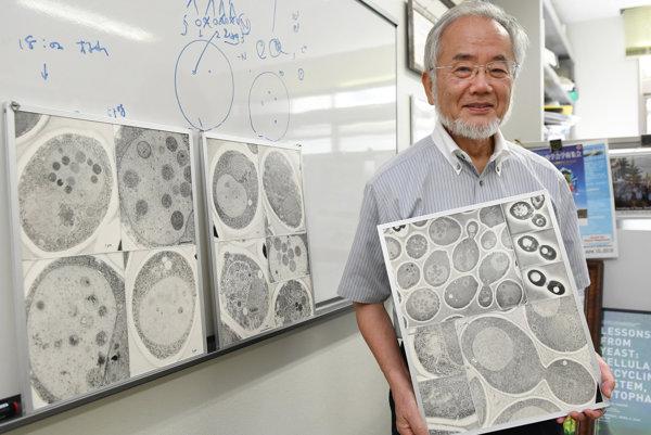 Prvá nobelovka v roku 2016 putovala už po 23 raz do japonska. Jošinori Ohsumi ozrejmil procesy bunkovej obnovy.