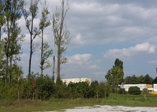 Na parcele celkovo pribudne 90 stromčekov.