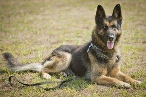 Neohlásenie registrovaného chovu psov by mal byť priestupok.