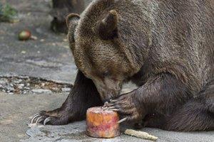 Medvede v ZOO dostali mrazenú ovocnú dreň.