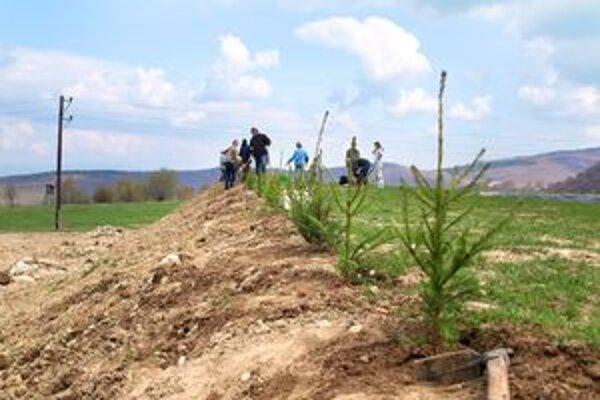 Dobrovoľníci vysadili mladé stromčeky na úpätí hrádze.