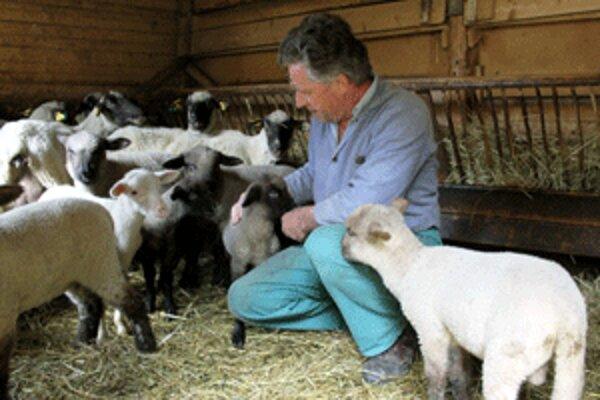 Chov oviec je pre Mariána Bátoru dlhoročnou záľubou.