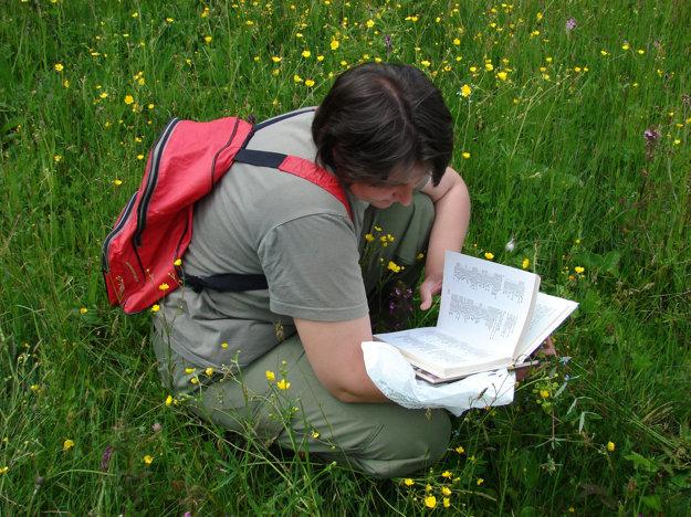 Botanici identifikovali na Kunešovských lúkach viaceré druhy chránených a ohrozených rastlín.