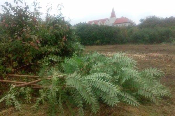 Len pár rokov trvalo, kým sa zo zeleného trávnika stala džungľa.