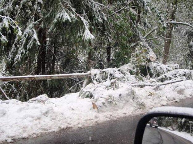 Októbrový sneh v roku 2009 narobil veľké škody.