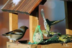 Kŕmidlo pre vtáky.