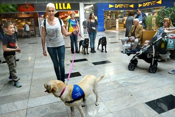 Atrakcia. Tri vodiace psy vo výcviku pútajú pozornosť.