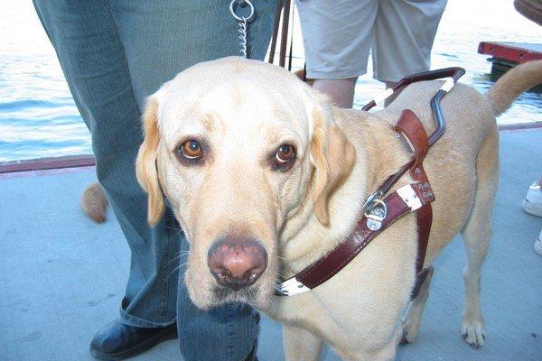 V súčasnosti nevidiacim pri orientácii v priestore pomáha najčastejšie sprievodca, biela palica alebo vodiaci pes.