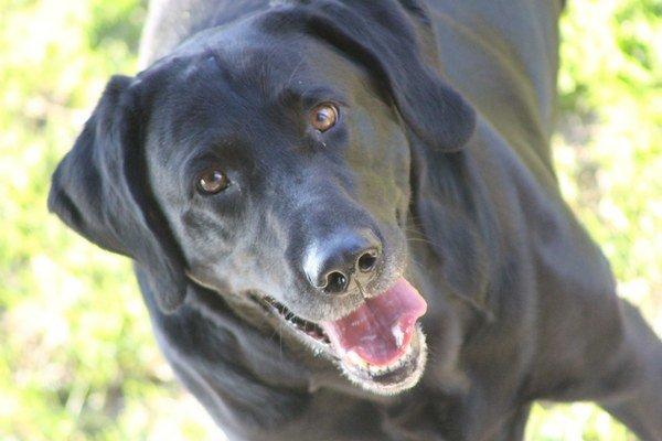 Píšťalka pre psov dokáže znepríjemniť rána ľuďom, ktorí bývajú na prízemí či prvom poschodí.