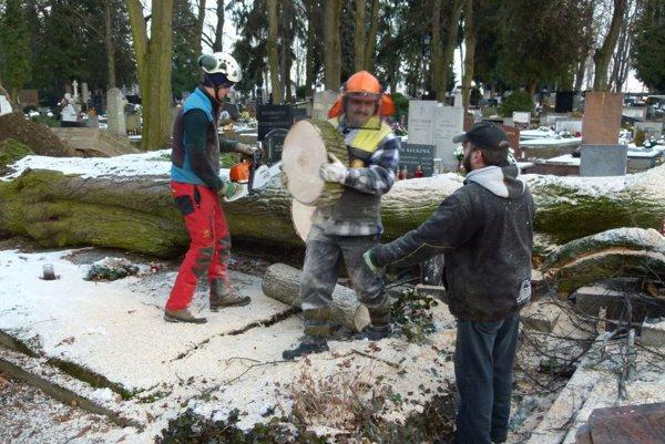 Odstraňovanie zvalených stromoch z pomníkov.