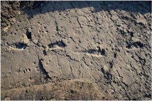 Odtlačky nôh australopitekov v Laetoli.