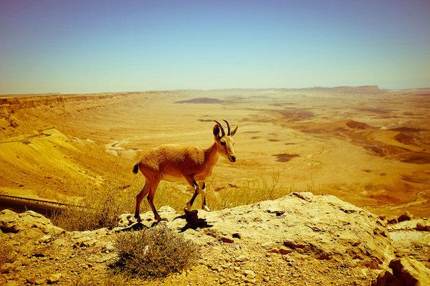 Krajina v Izraeli je bohatá na rastlinnú aj živočíšnu ríšu a objavíte tu aj mnoho prírodných útvarov.
