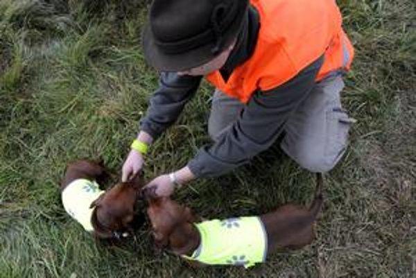 Vlastných psov pre istotu poľovníci označujú aj reflexnými prvkami.