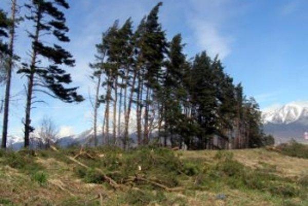 Vietor v piatok strhával v Tatrách stromy.
