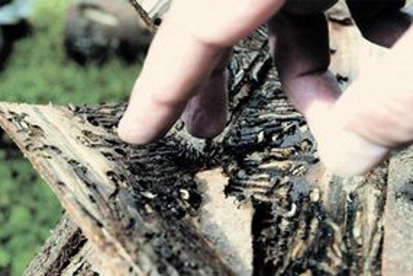 Za ochranu lesov platíme aj firmám, ktoré tam vôbec nechodia.