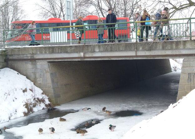 Kačice prilákal prístup k nezamrznutej vode. Ľudia ich tu prikrmujú.