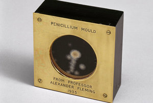 Vzorka plesne schopnej produkovať penicilín. Alexander Fleming ju v roku 1935 venoval svojmu priateľovi Douglasovi Macleodovi. Vzorka stála na počiatku využitia penicilínu v medicíne.
