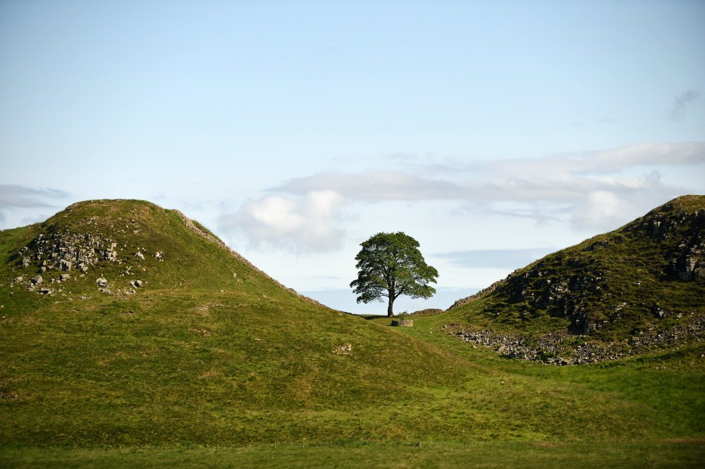 Javor v príkrom údolí, Anglicko, Spojené kráľovstvo, niekoľko storočí Toto je pravdepodobne najčastejšie fotografované miesto Northumberlandského národného parku. Javor tu rastie v príkrom údolí, z obidvoch strán ohraničenom Hadriánovým valom. V roku 1991 sa tu nakrúcal film Robin Hood: Kráľ zbojníkov v hlavnej úlohe s Kevinom Costnerom. Od tých čias sa javor nenazýva inak ako strom Robina Hooda.