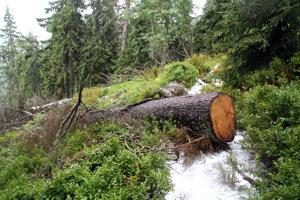 Smrekovica patrí medzi najvýznamnejšie chránené územia. Miestami má charakter pralesa.