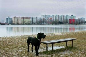 Grant Bratislavy, Pozdrav z Bratislavy, (séria fotografií)