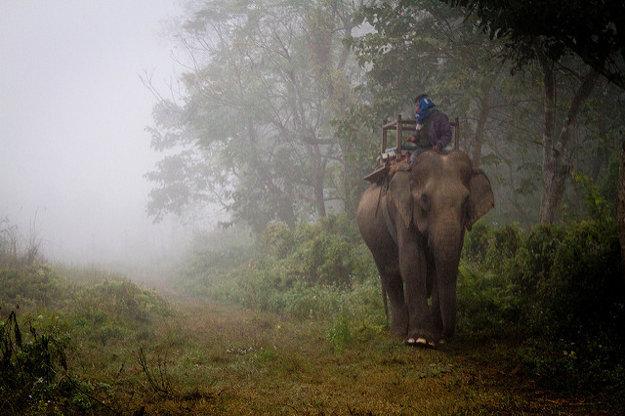 V Nepále sa môžete odviezť napríklad na slonovi.