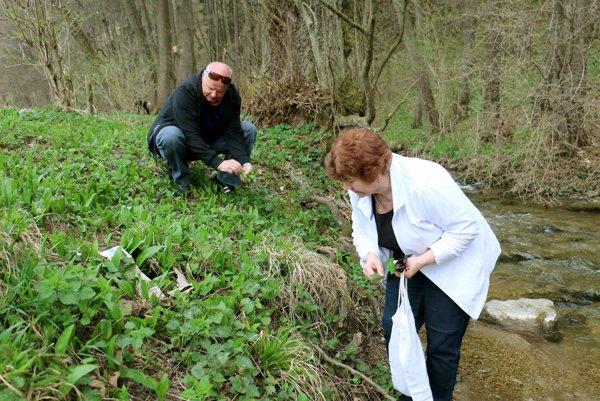 Manželia Plšekovci zbierajú medvedí cesnak v Tužine.
