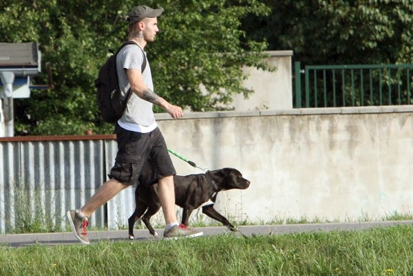 Majitelia psov majú viaceré povinnosti, ktoré by nemali zanedbávať.