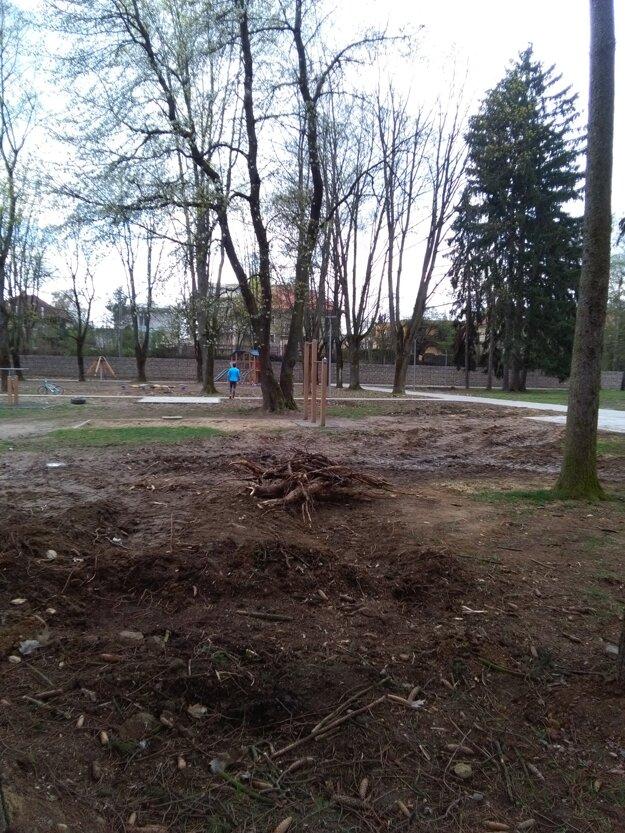 Vyrúbali niekoľko stromov.