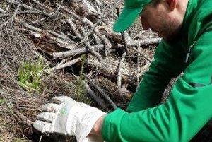 Zamestnanci reťazca sadili stromčeky šiesty rok.