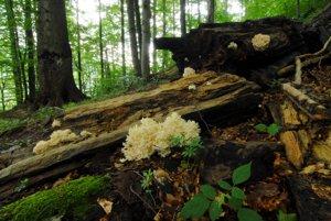 Prales v Národnej prírodnej rezervácii Stužica v Národnom parku Poloniny. Aj on je súčasťou Svetového prírodného dedičstva UNESCO.