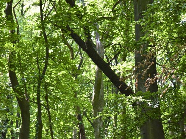 Podľa ochranárov v Horskom parku nie je žiadna katastrofická situácia.