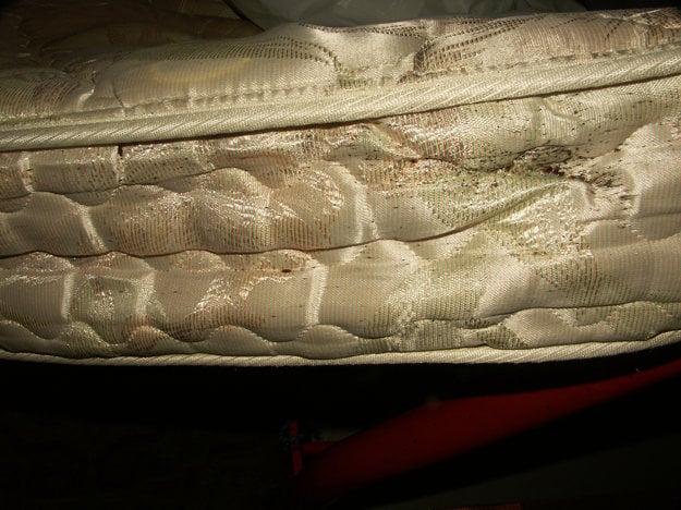 Vajíčka, larvy a dospelé ploštice na matraci.