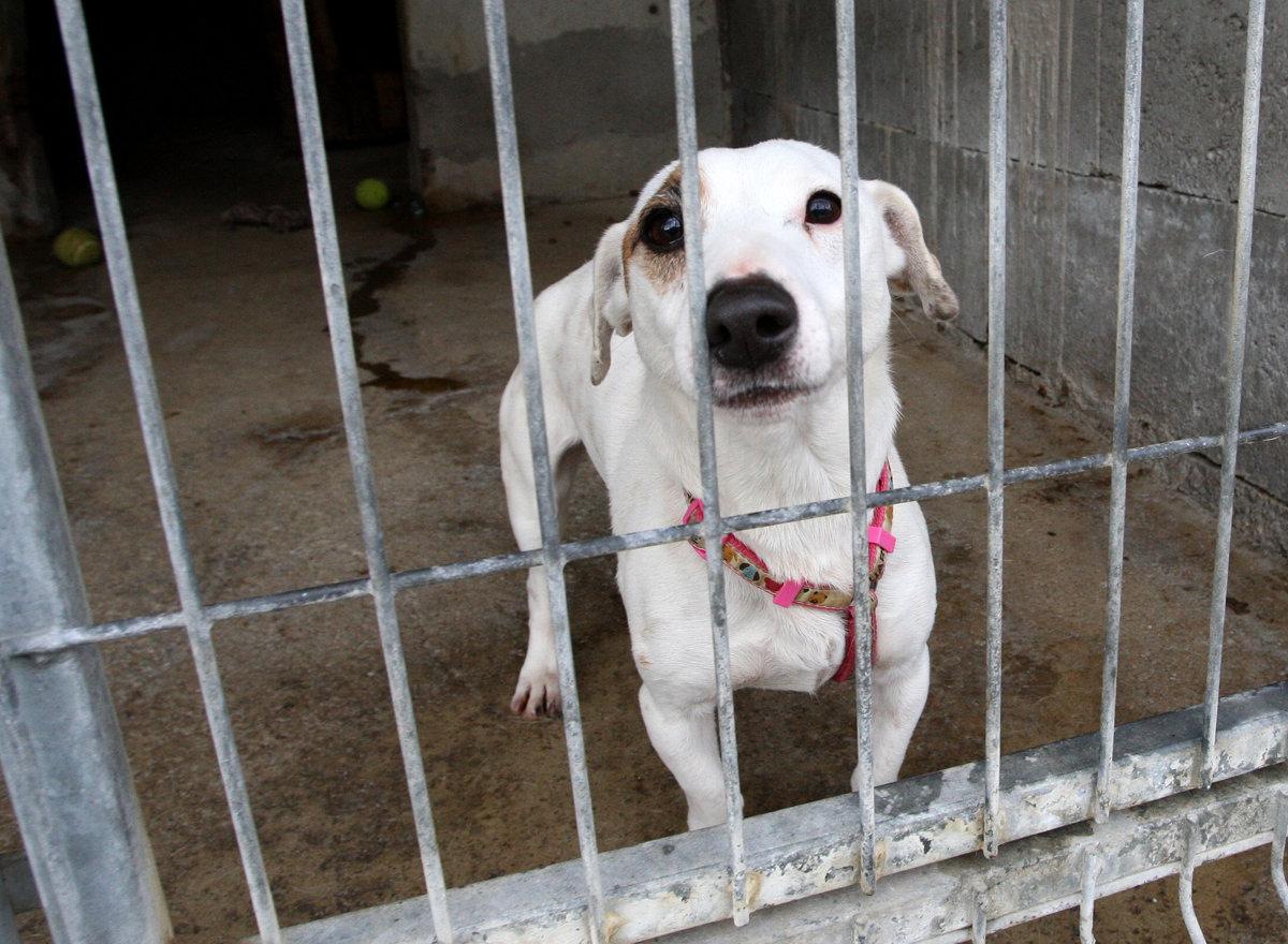 Návrhy proti množiteľom psov podľa veterinárov nepomôžu - domov.sme.sk 1da94c42b9a