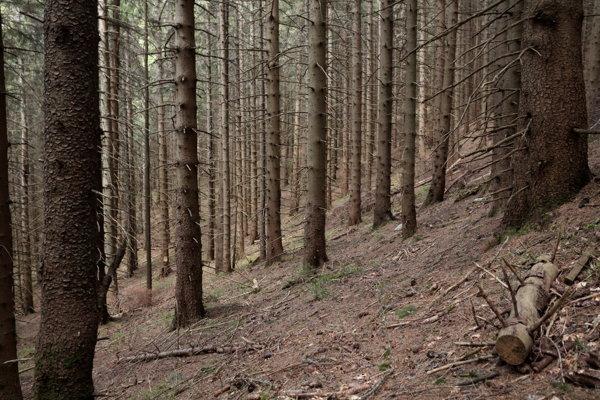 Vo vetrom a lykožrútom zasiahnutých lokalitách, kde sa predtým takmer vôbec nezasahovalo, sa začali používať rovnaké hospodárske postupy, aké sa využívajú mimo chránených území, teda tam kde je prvoradá drevoprodukčná funkcia lesov.