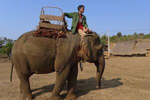 Jazdenie na slonoch v Kambodži nie je dobrý nápad.
