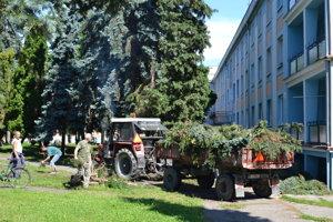 V V centre Strážskeho v pondelok predpoludním pracovníci zbierali popílené konáre.