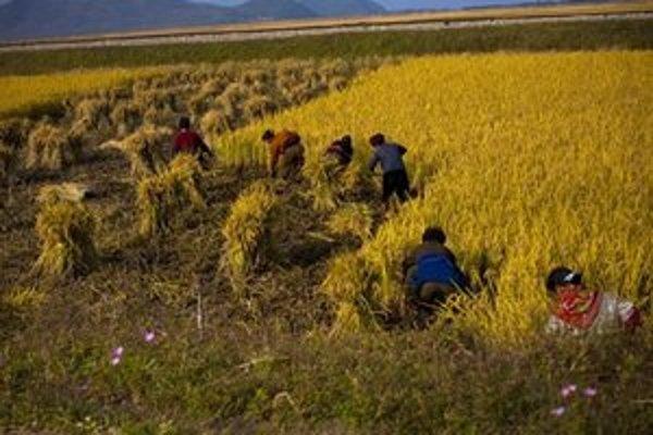 Práca na poli neďaleko severokórejského mesta Wonsan.