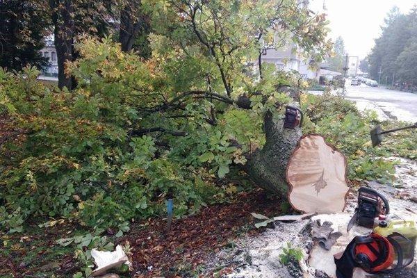 Ešte pred týždňom sa na tomto mieste konalo zhromaždenie za záchranu pagaštana konského, o pár dní na to, konkrétne v stredu, už ležal mohutný strom na zemi.