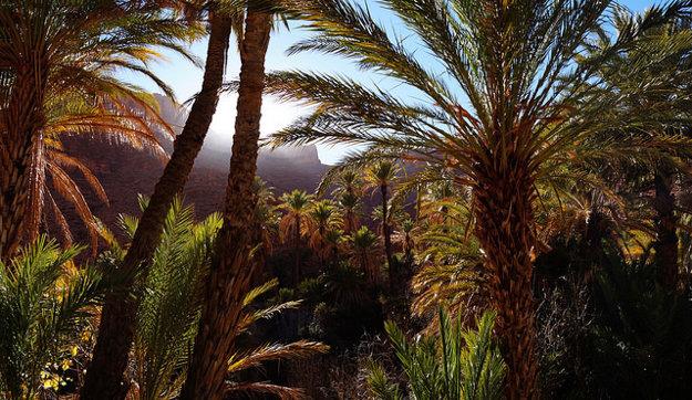 Exotická príroda v okolí Marakéšu.