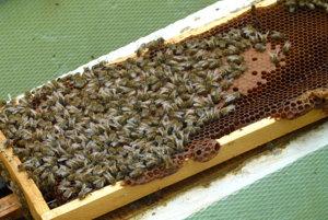 Včelári majú za sebou ďalší včelársky rok.