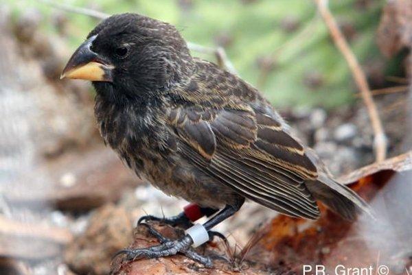 Nový druh, ktorý pred 36 rokmi neexistoval.
