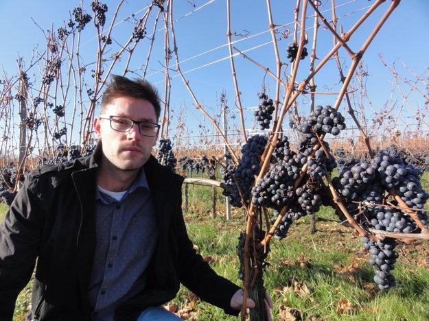 Adam Žilík pri Frankovke modrej. Je to jedna z dvoch odrôd, ktorú Château Topoľčianky nechali vo vinohradoch na zimný zber.