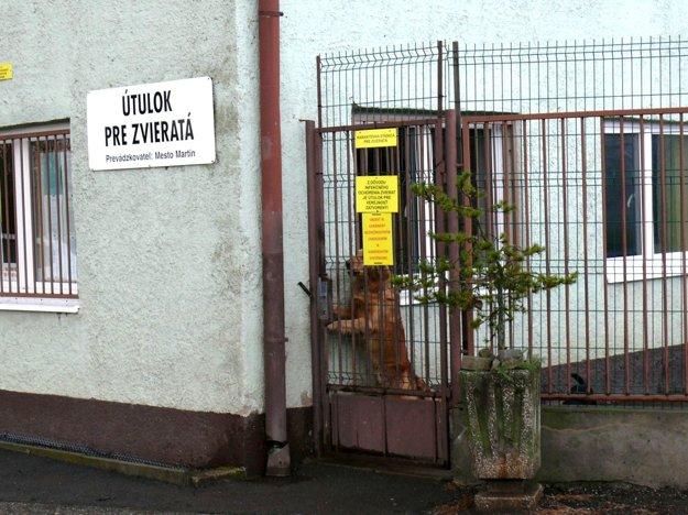 Útulok pre zvieratá vMartine. Ročná prevádzka aúdržba vyjde mesto na 20 tisíc eur, príspevok sa ešte zvýši.